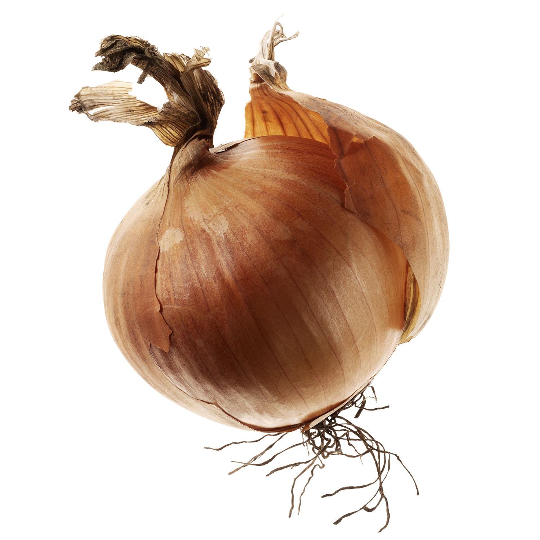 Food Photography Photographer London UK Onion