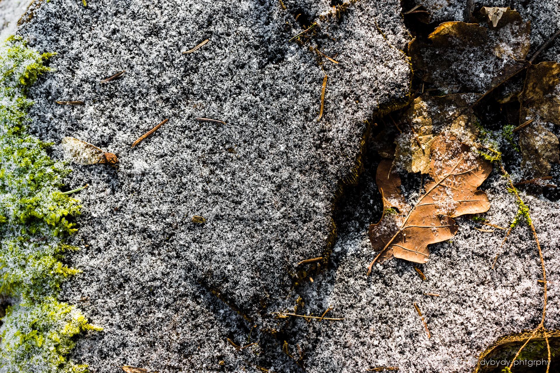 three flattened seasons  - sony nex 7 | sigma 30 f2.8 | f4.0 | ISO100 | 1/125