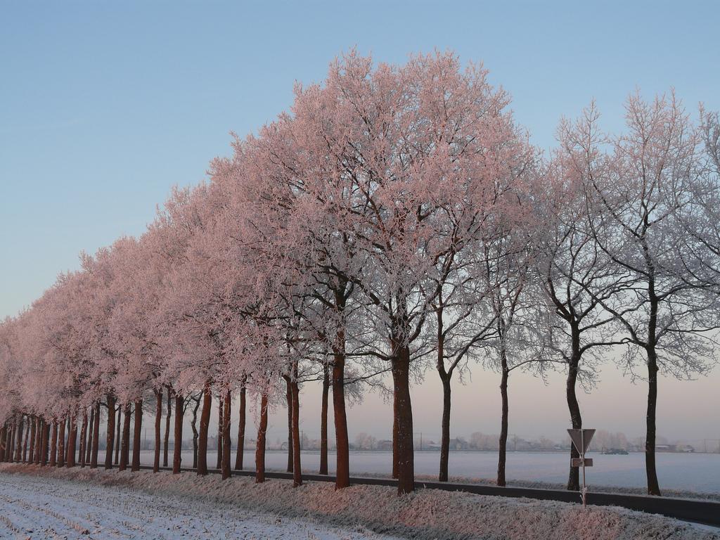 Zwolle3.jpg