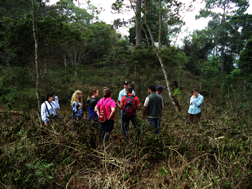 OSU team witnesses devastating effects of rust on coffee farm