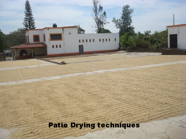 Colima coffee patio drying.png
