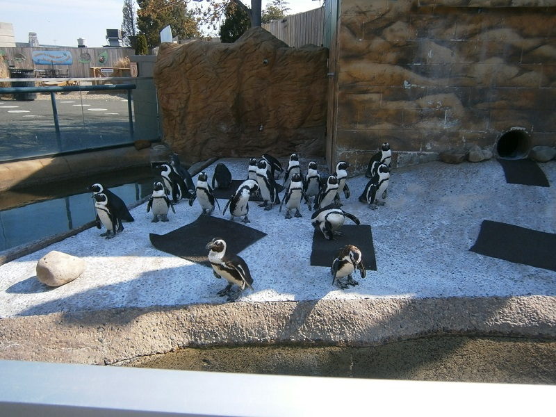 Penguin Exhibit at Adventure Aquarium