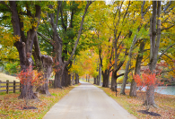 tree-lined drive.png