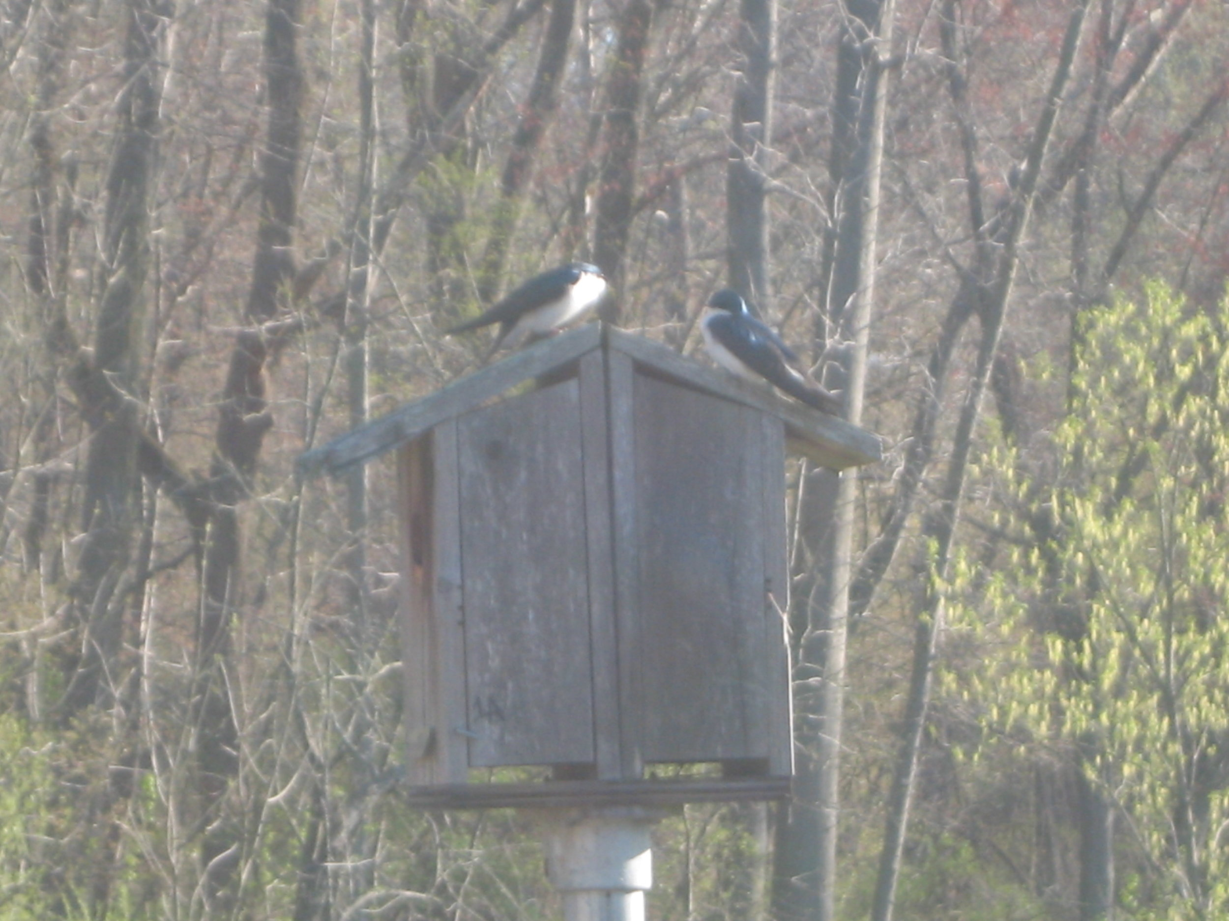 Research Center bird box