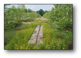 Biofiltration, vegetated swales and rain gardens
