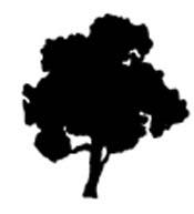 wide black tree.jpg