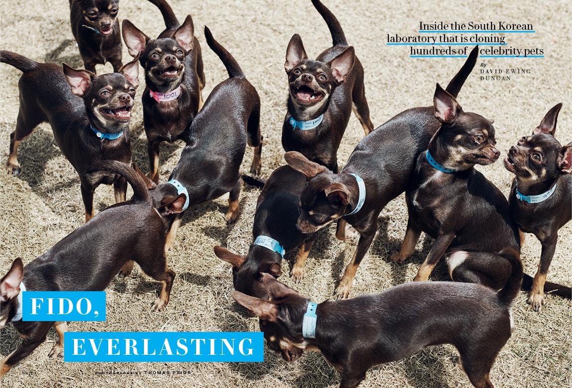 09 DOG CLONING_72dpi.jpg