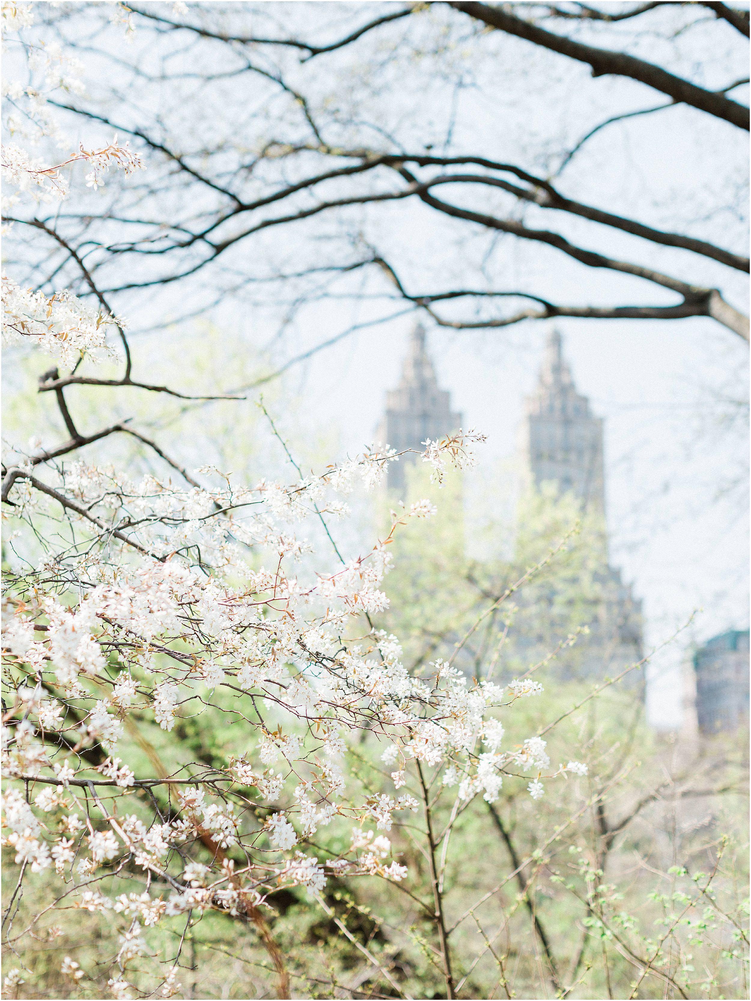 JeremiahRachelPhotography_CentralPark_NYC_SpringtimeBloom_EngagementSession0009.JPG