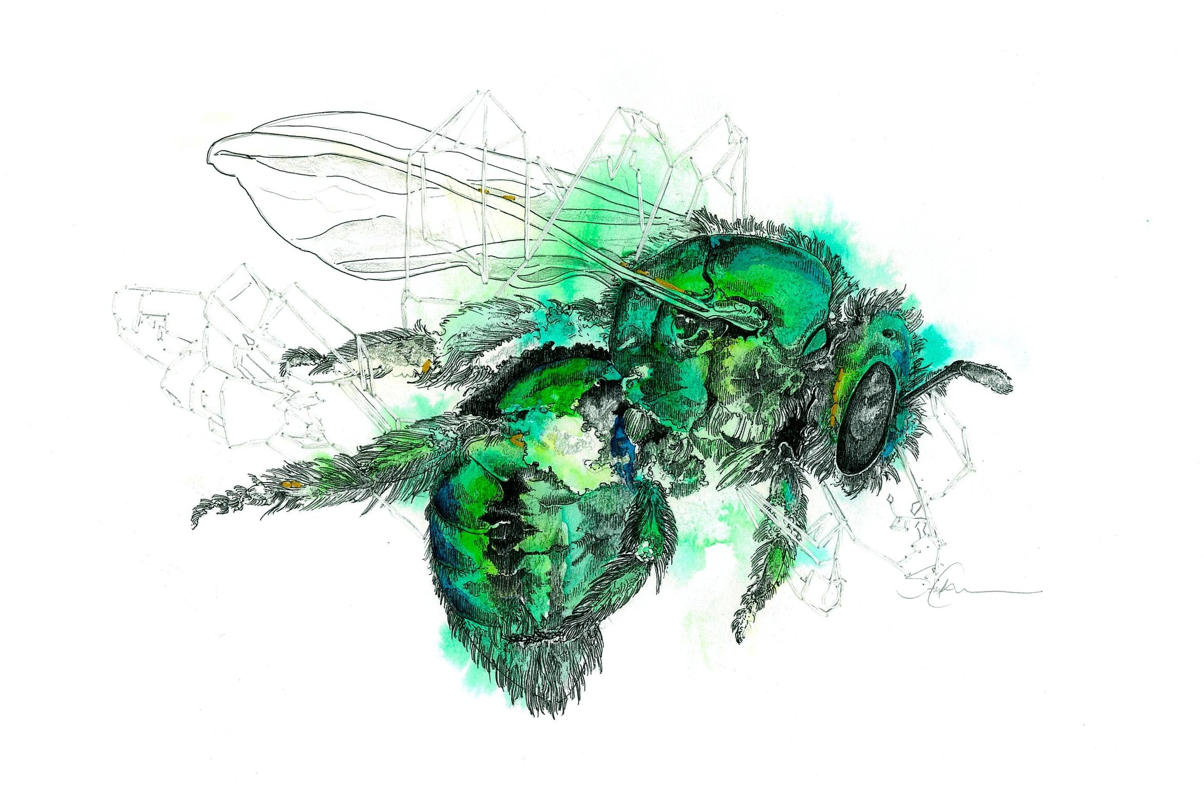 Emerald Bee
