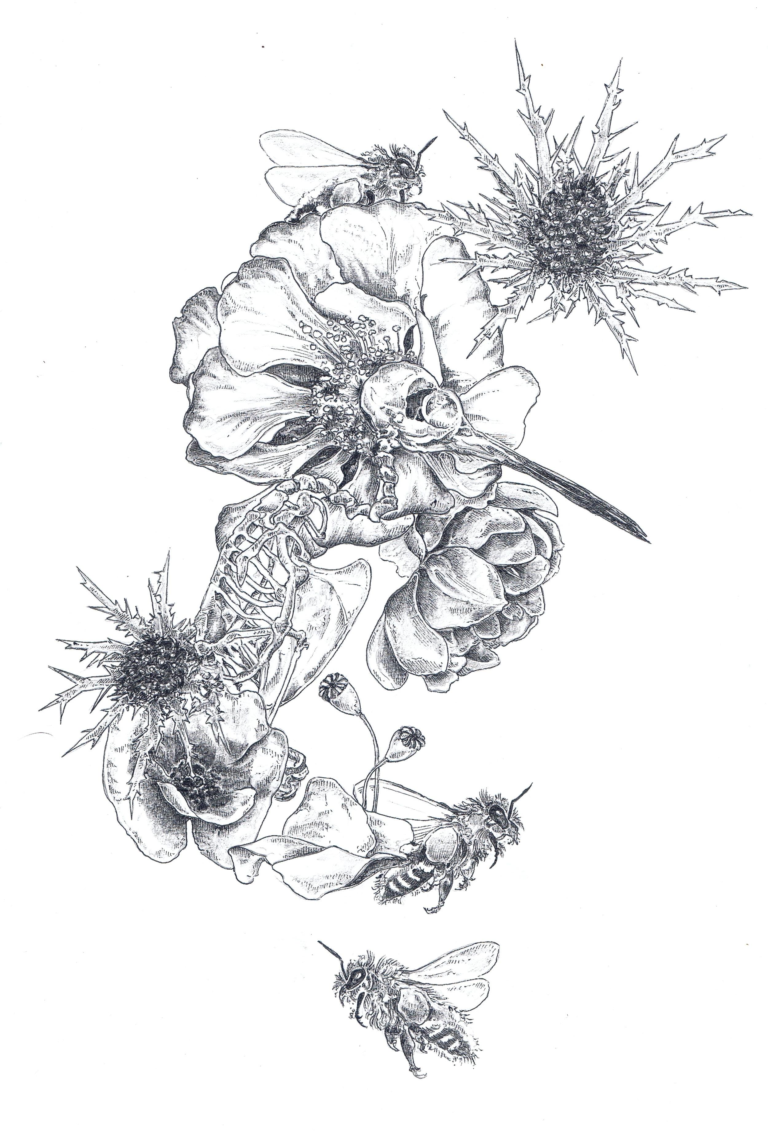 Hummingbird Floral