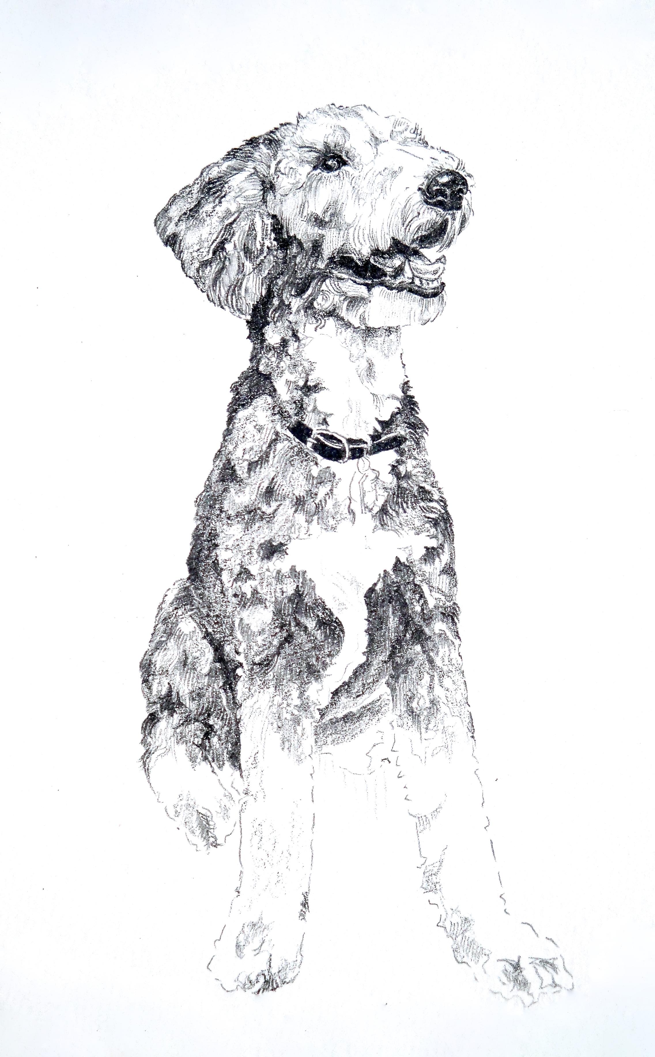 Molly 1 (sketch)