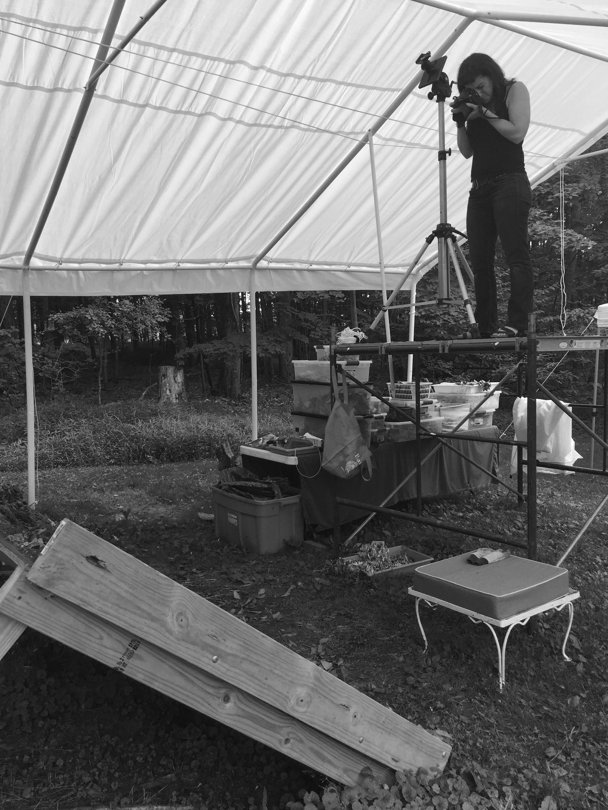 Tanya Marcuse working in her outdoor studio, 2016.  Photograph by Ann Burke Daly