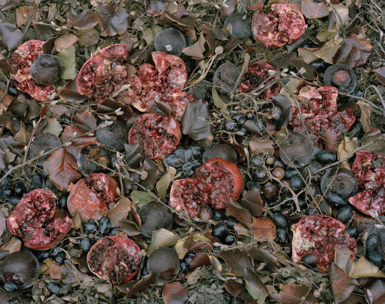 "Fallen Nº 182, 36 x 44"" 2011  ""In 'Fallen No. 182' (2011) pomegranates, the ancient symbol of fecundity, lie split open and losing their seeds in a bed of grapes, plums and leaves—the reds, purples and greens reminiscent of Marie Cosindas's palette, although the scale and subject are quite different."" - William Myers, The Wall Street Journal"
