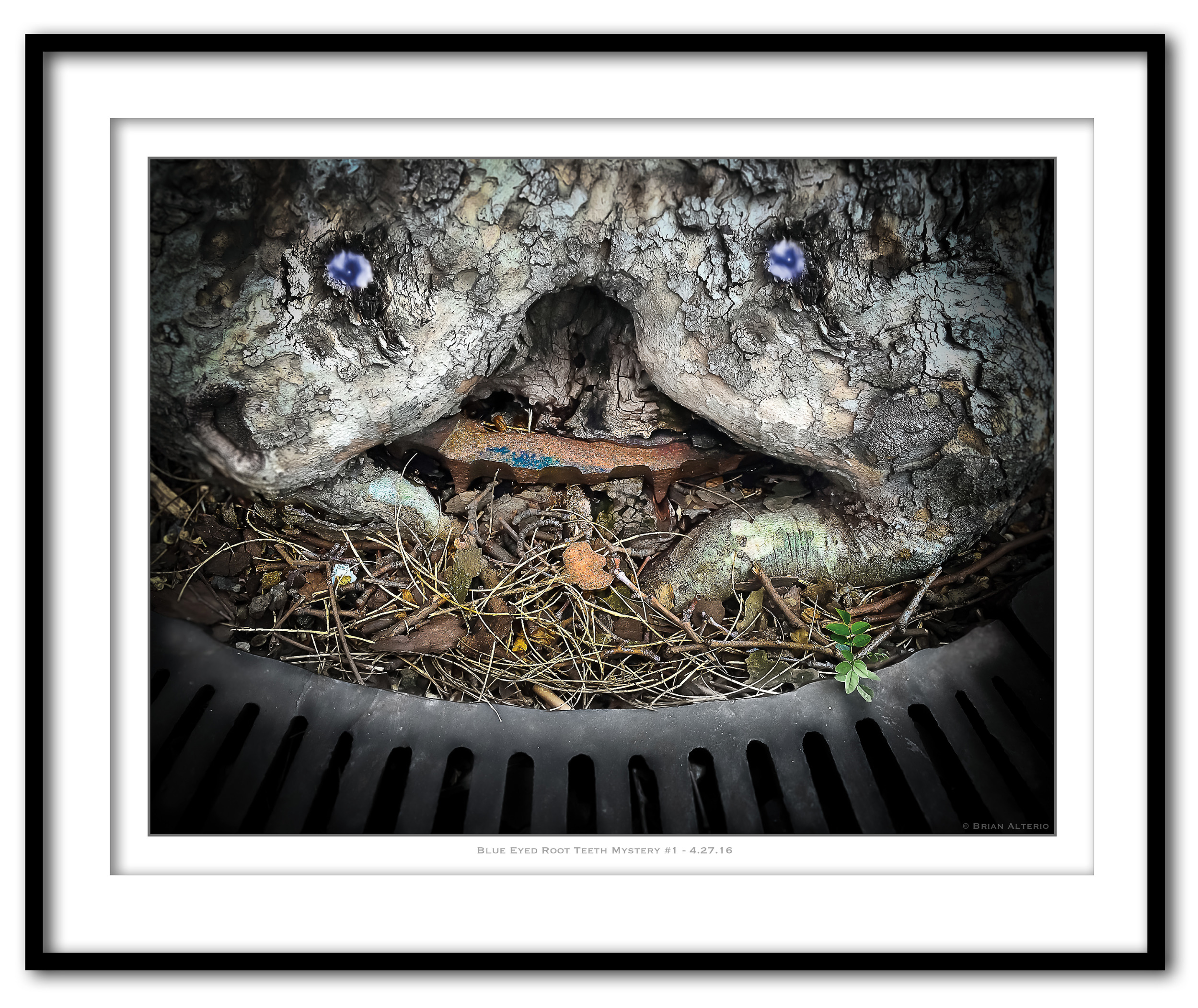 Blue Eyed Root Teeth Mystery #1 - 4.27.16- Framed.jpg