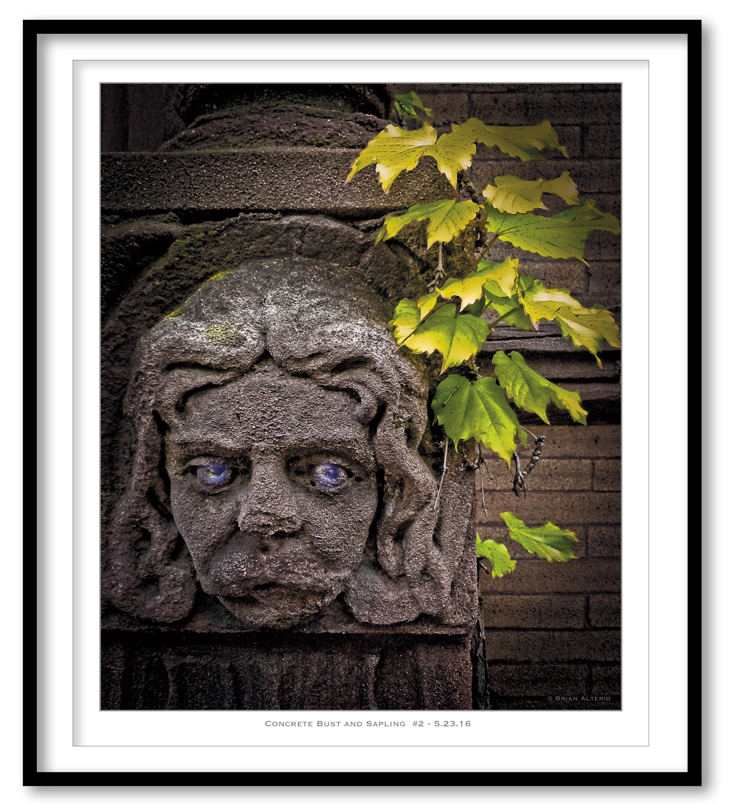 Concrete Bust and Sapling  #2 - 5.23.16 - Framed.jpg