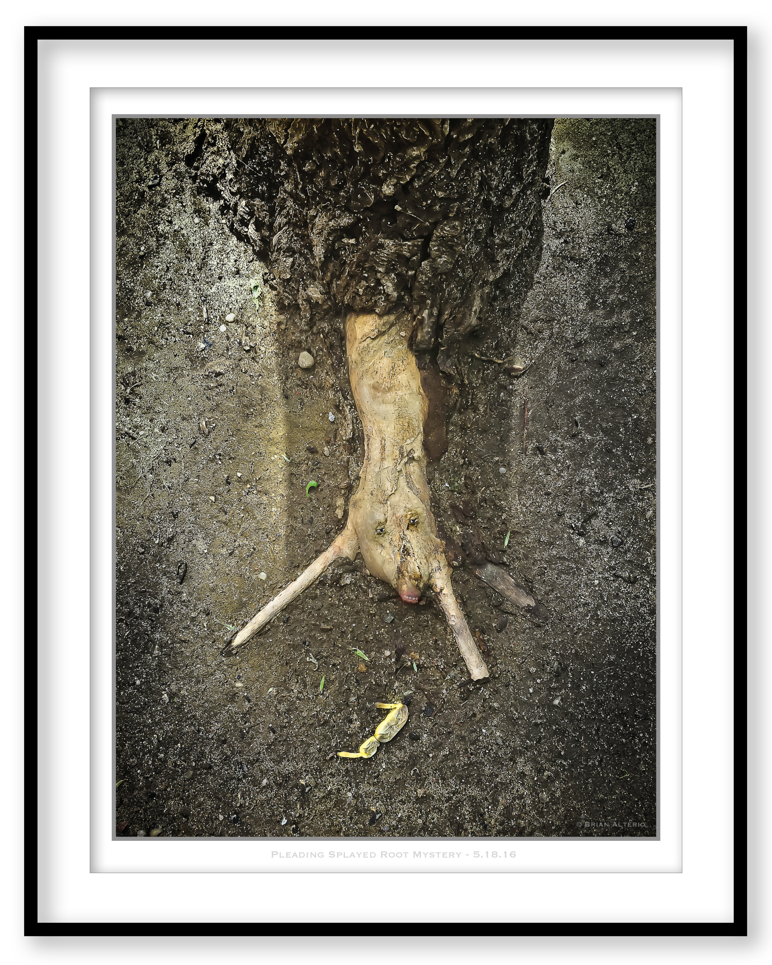 Pleading Splayed Root Mystery - Framed.jpg