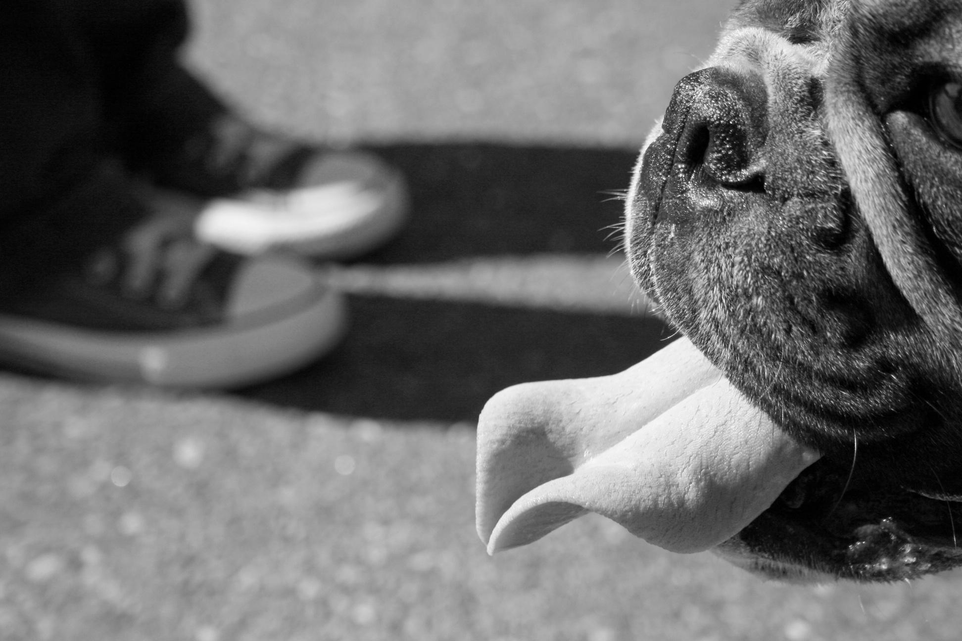 Skitchy Dog.jpg