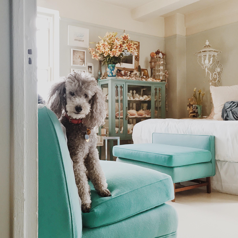 Winky, Linda Rodin's dog
