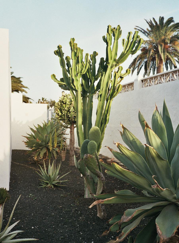 Becca-Horn-Fuerteventura-03.jpeg