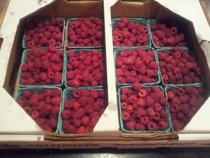 """Raspberries from our garden. They are """"ever bearers"""" and typically produce for 3 months."""