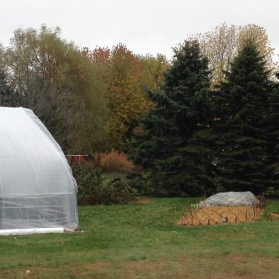 A small blower pushes air in between the layers of plastic for insulation. To the right there is sage and lettuce also tucked under a row cover to extend the season.