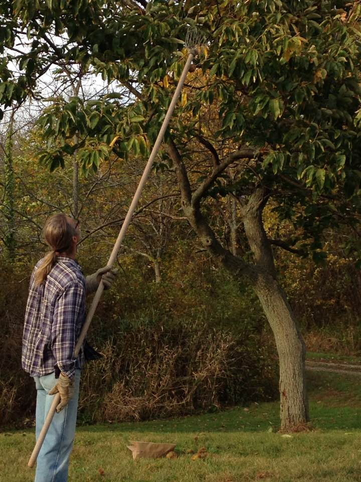 Jamie's fruit and nut picker is as old and sturdy as Bob's trees