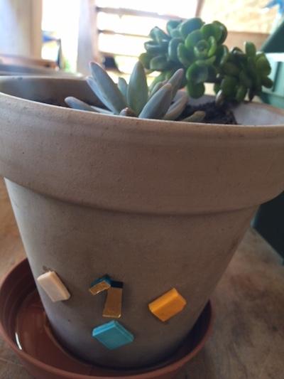 Vaso decorato con piantine grasse della mia coltivazione