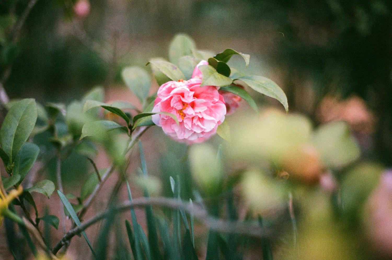 1505 birmingham botanical gardens09.JPG