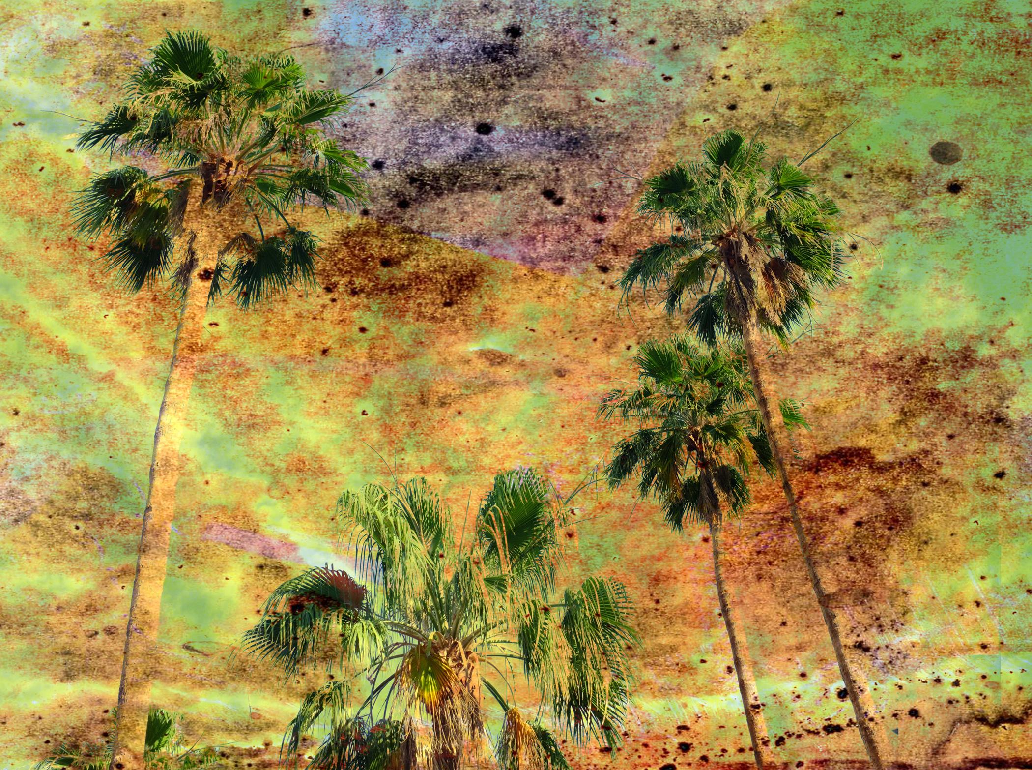 Citrisolv Palms