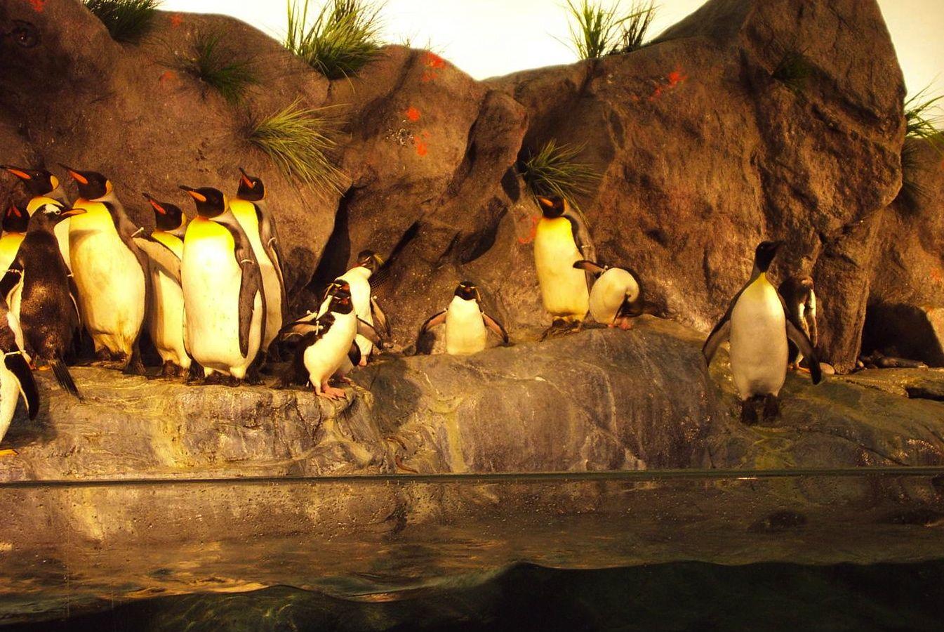 Zoo penquin.jpg