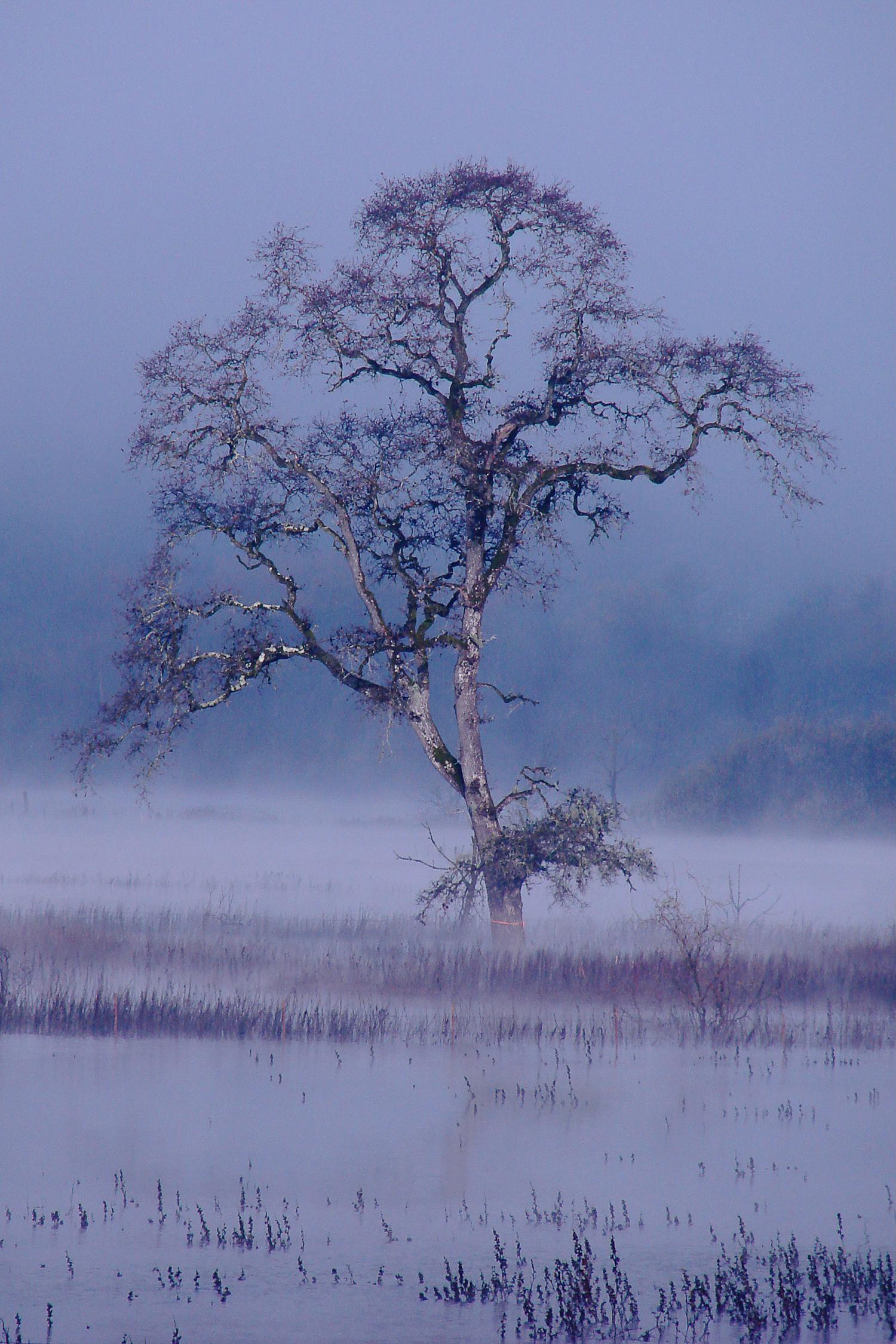 Lone Tree, Japan