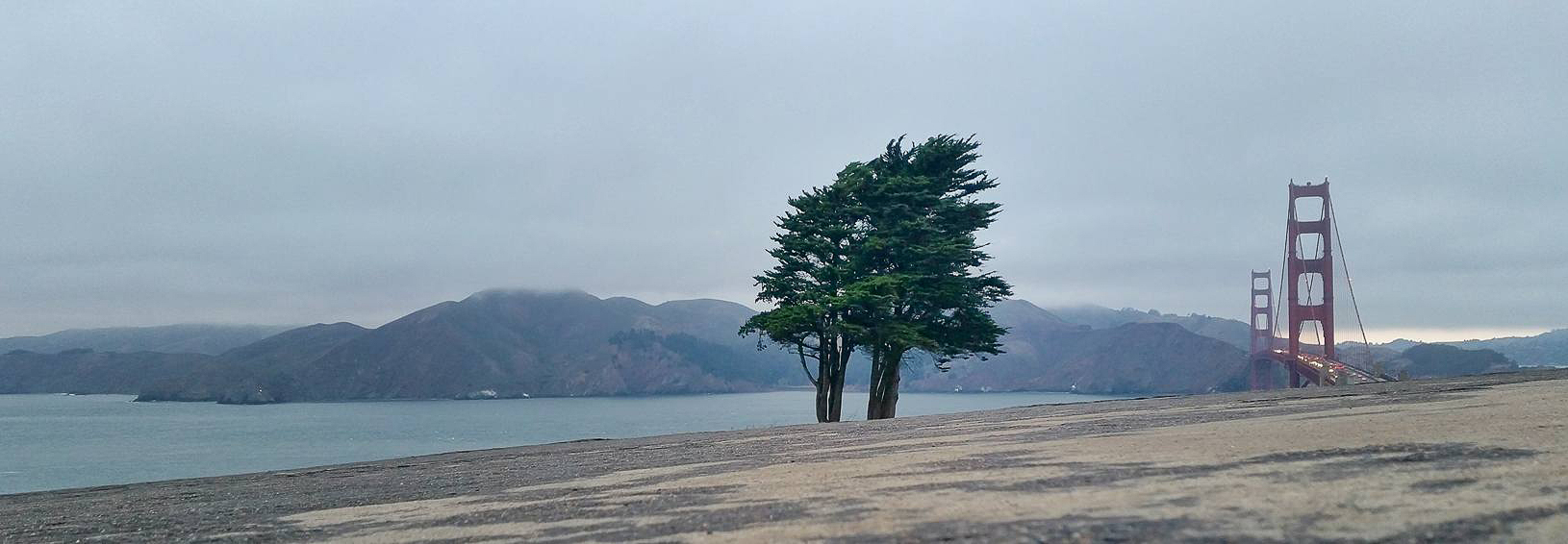 Lone Tree at Golden Gate with Photographer