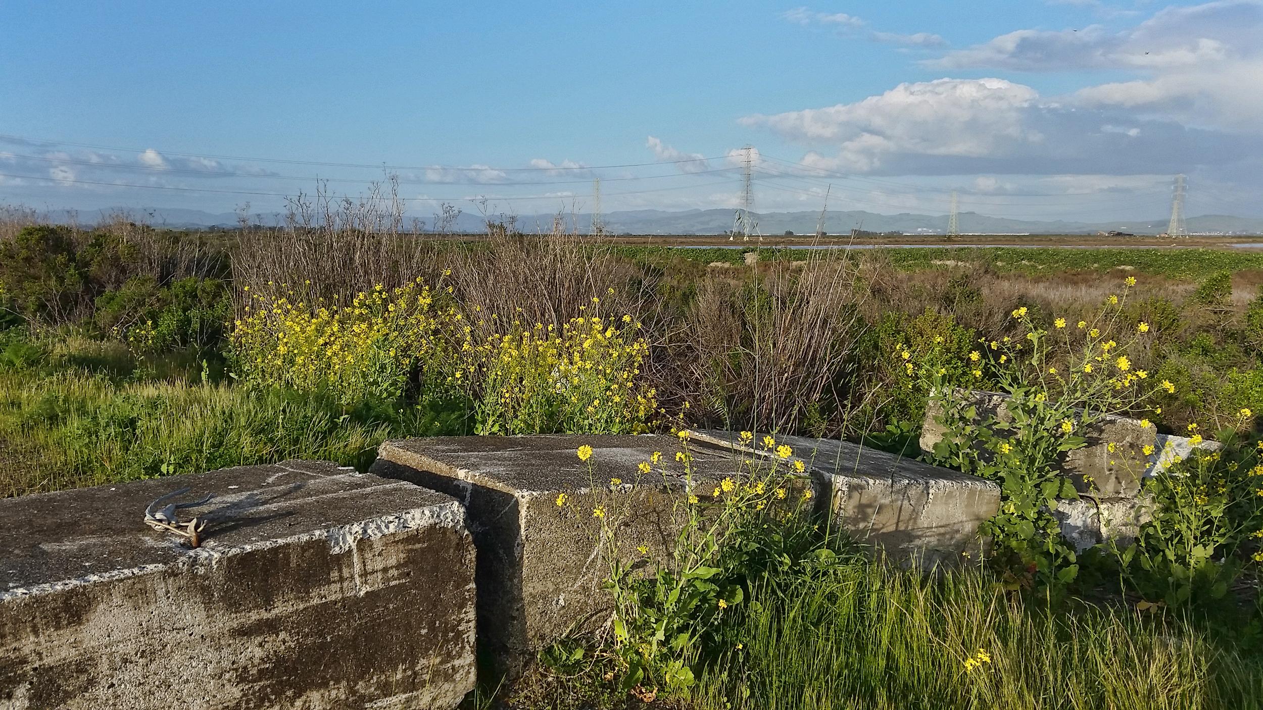 Blocks on the Wetlands, Highway 37