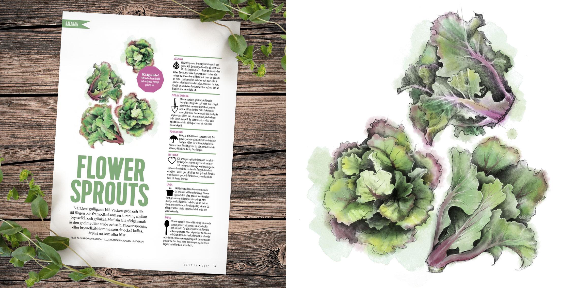 Buffe-sprouts.jpg