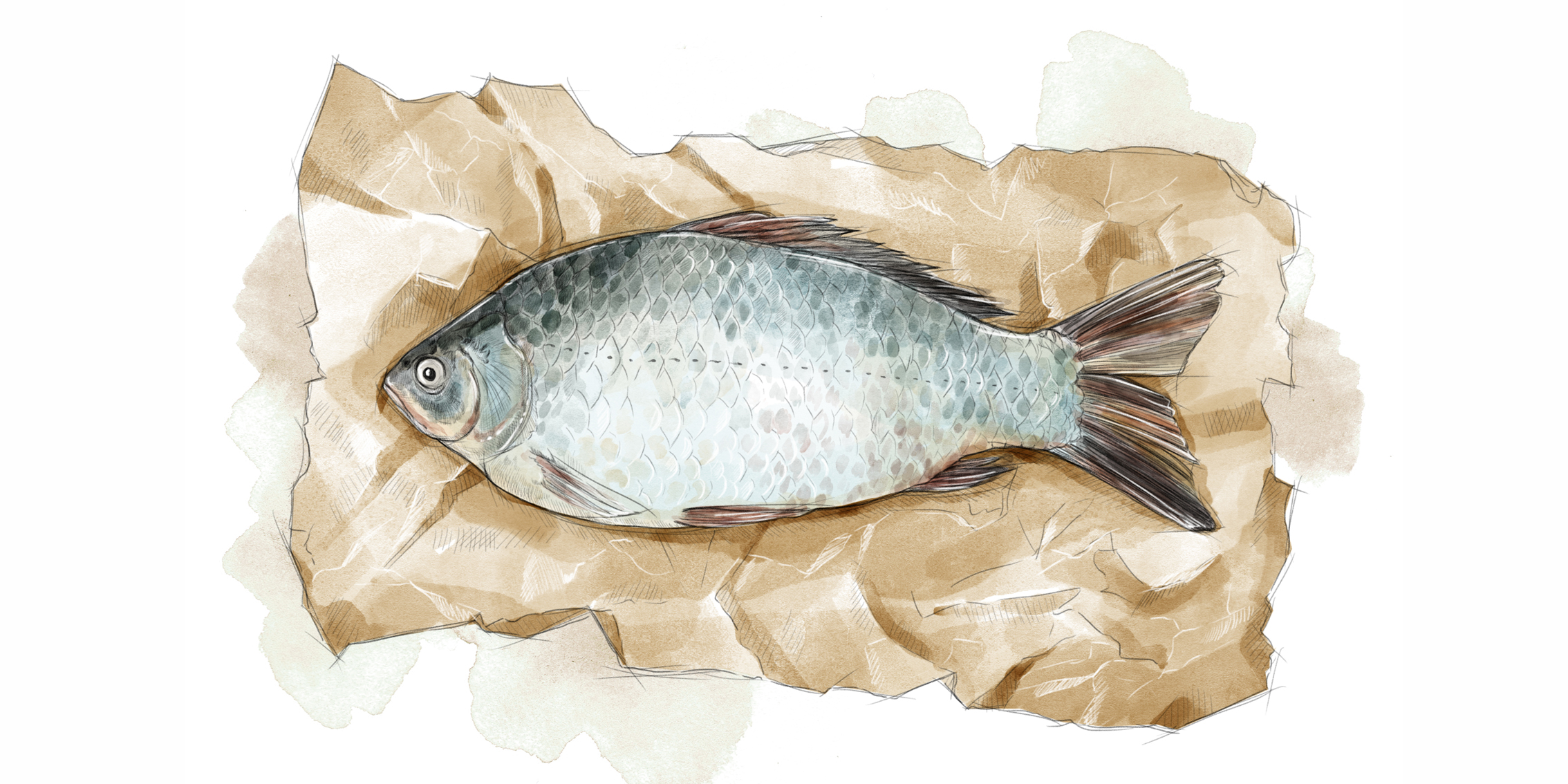 Buffe-fisk.jpg