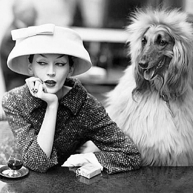 It's a dogs life I tell ya 🐶 Vintage Hat Inspiration   Photo: #RichardAvedon 1955  Model: #Dovima    ______________________________________  #vintage #vintagehat #vintagestyle #dog #hat #flowerpothat #1950s #50s #tbt #baskethat #design #inspiration #unahats