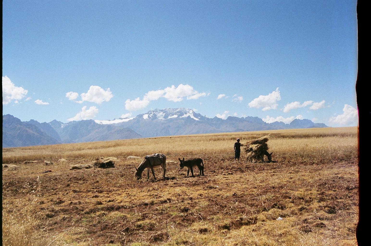 Ollantaytambo, Peru. 35mm film, 2014.