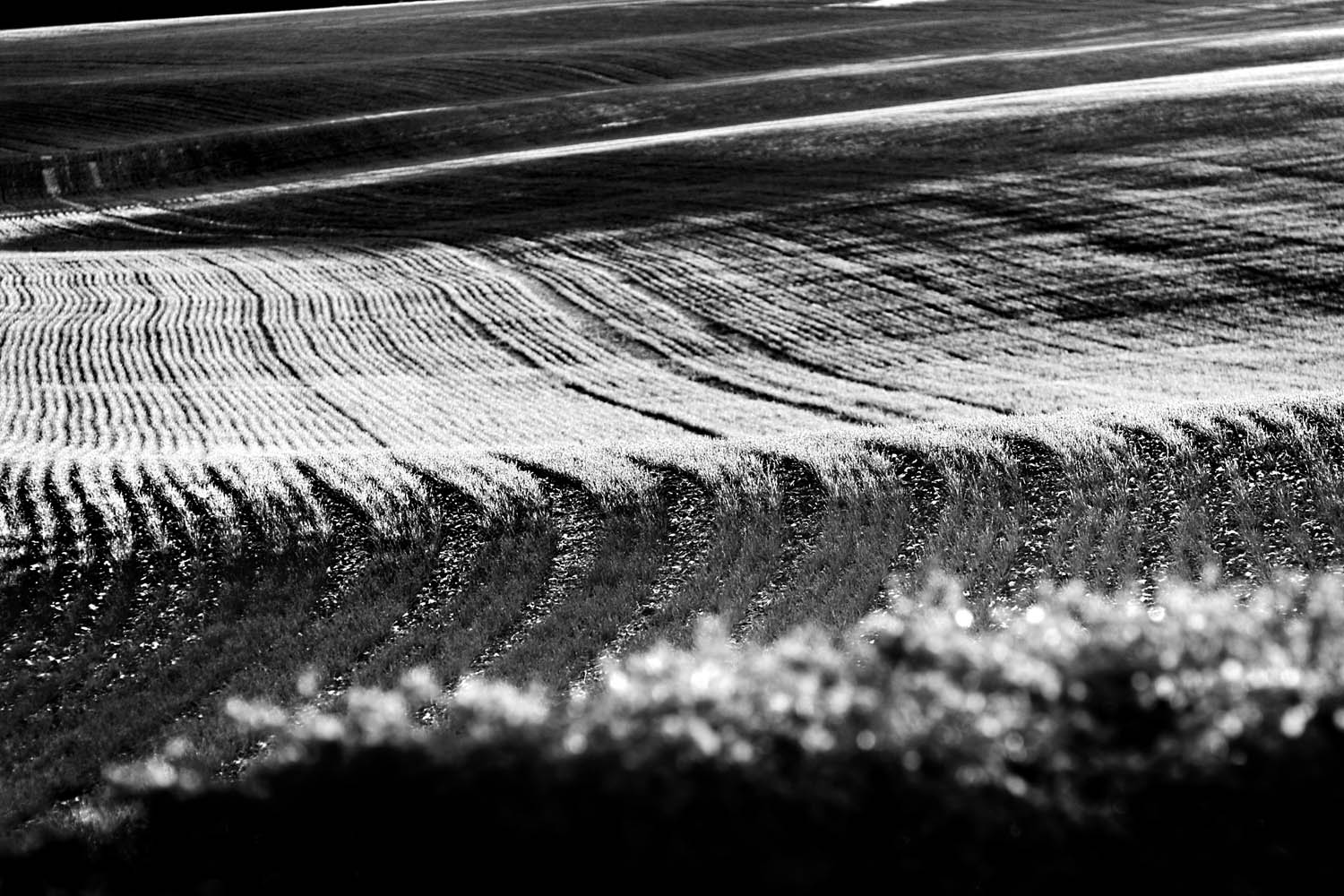 Field Contours, Wiltshire, UK