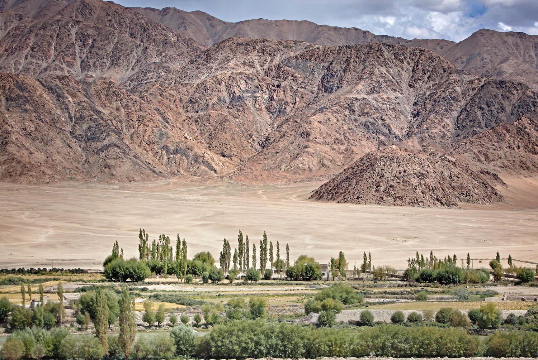 Irrigated fields and desert from Stakna Monastery, Ladakh, India