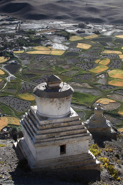 Stupa & fields, Stongde Monastery, Zanskar, Ladakh, India
