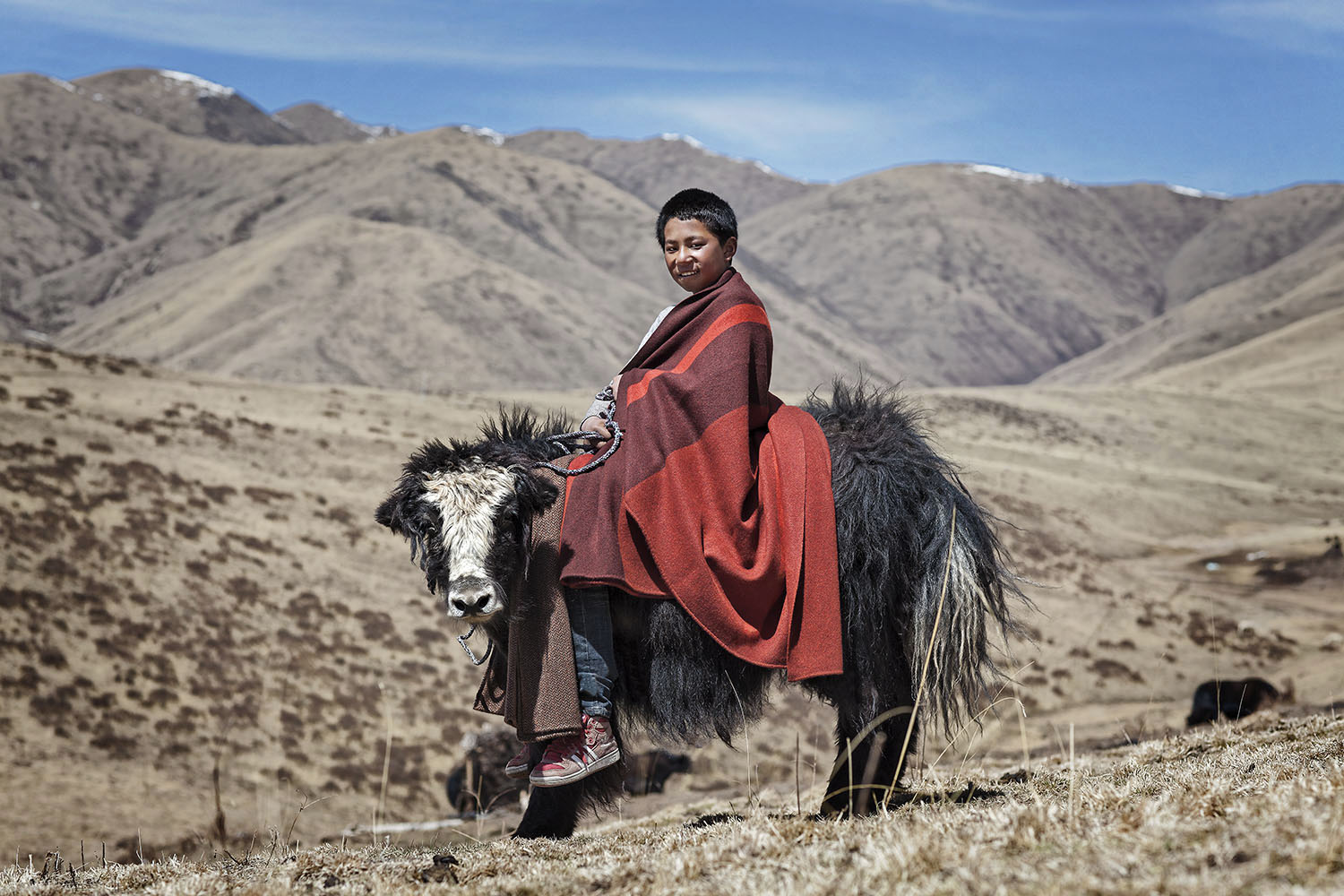 Boy and young yak, Norlha Textiles, Amdo, Tibet/China
