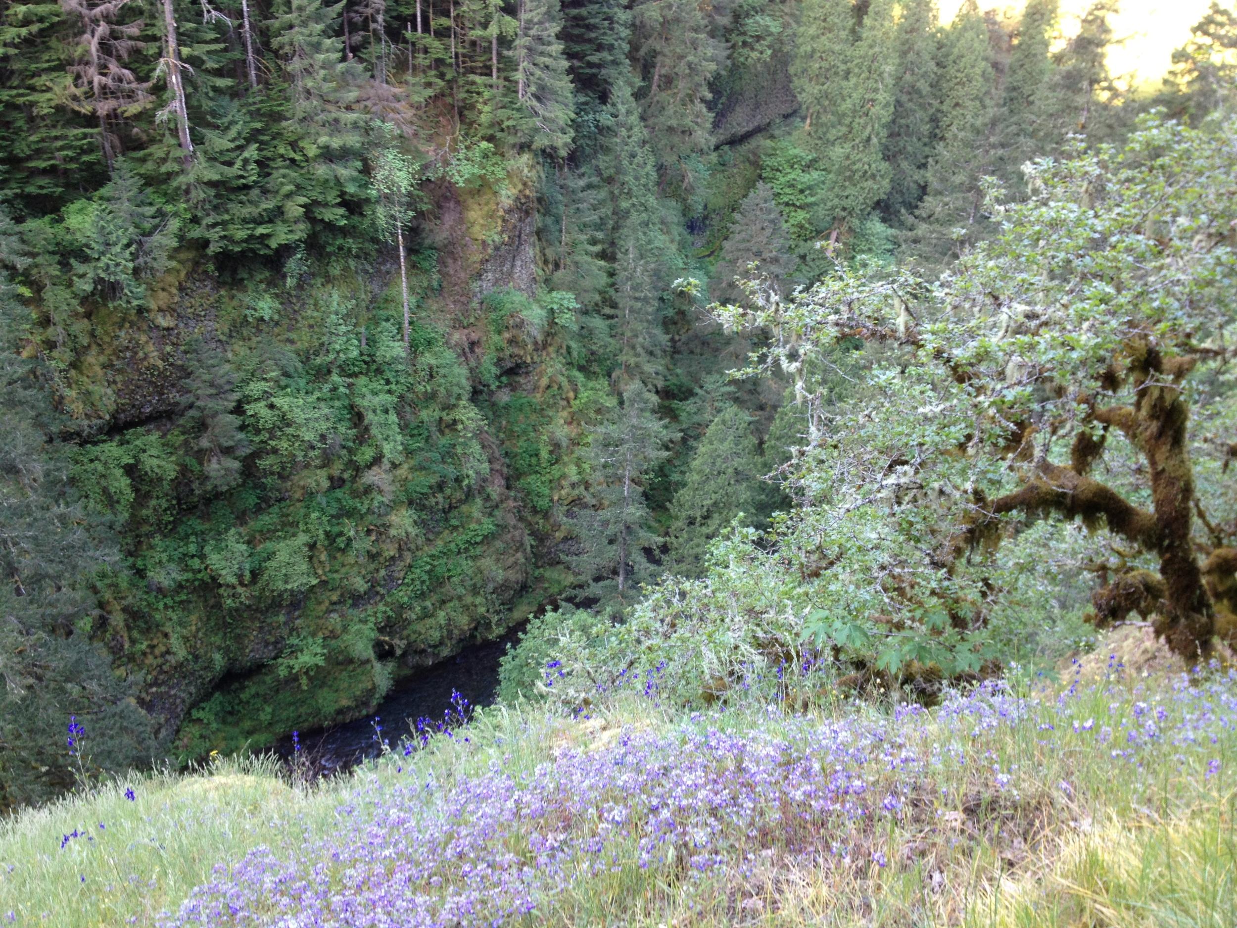 Eagle-Creek-Oregon.JPG