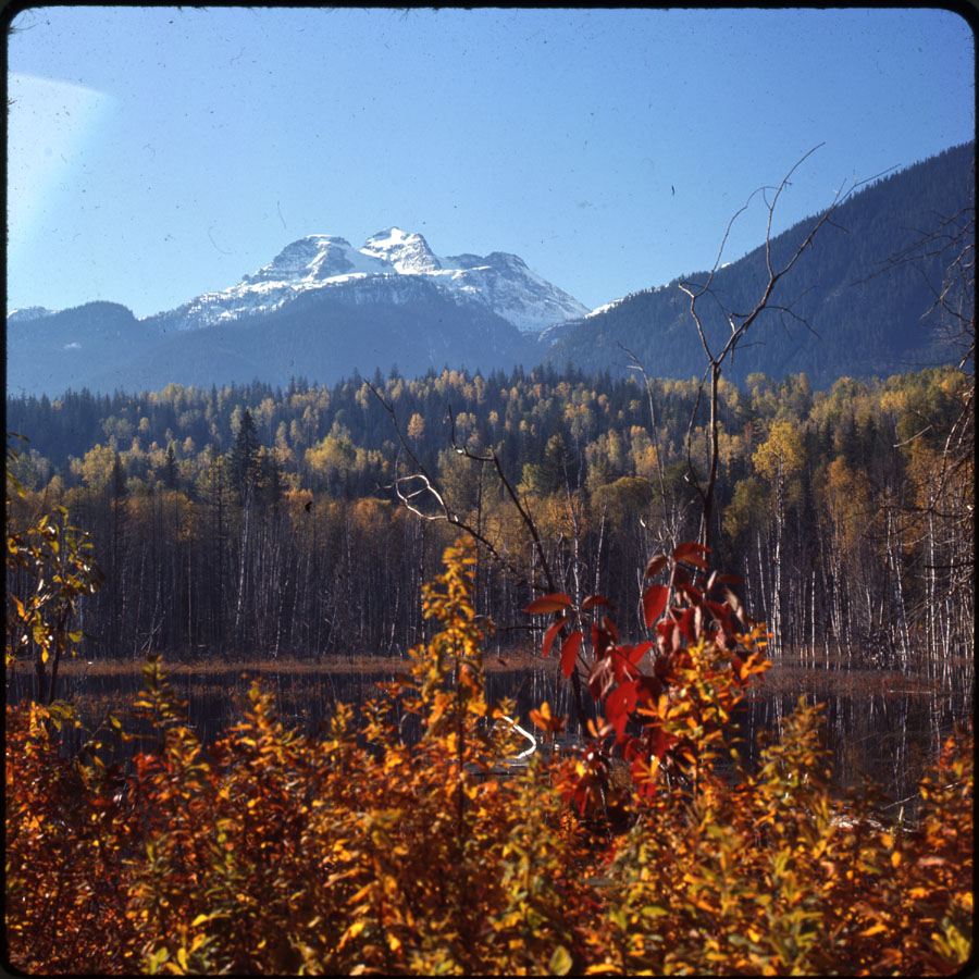 Mt. Begbie and Autumn Trees [DC2-4]