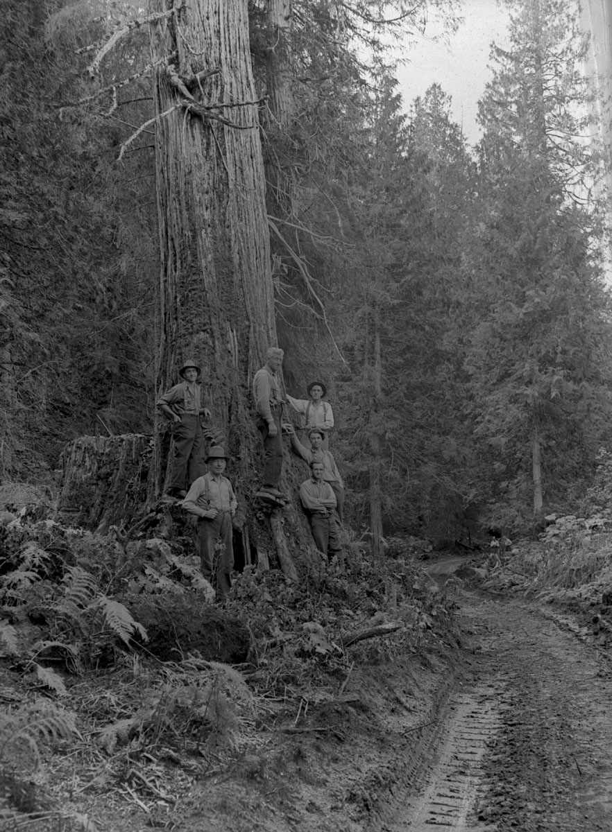 Bob Edgar & Partner Cutting Cedar, 1938 [DN-1003]