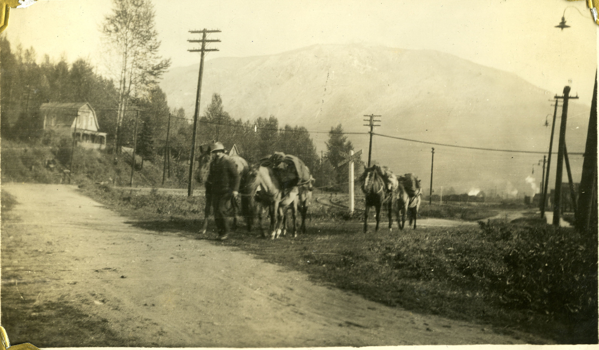 Andy Kitson's pack horses on Victoria Road, Revelstoke.
