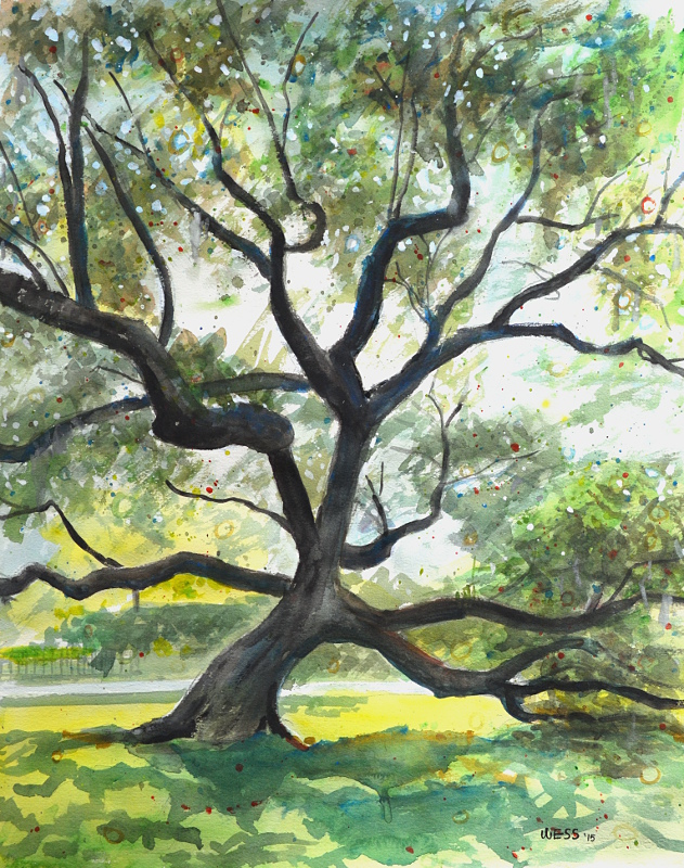 "Live Oak #5, 20x16"", watercolor, $300"