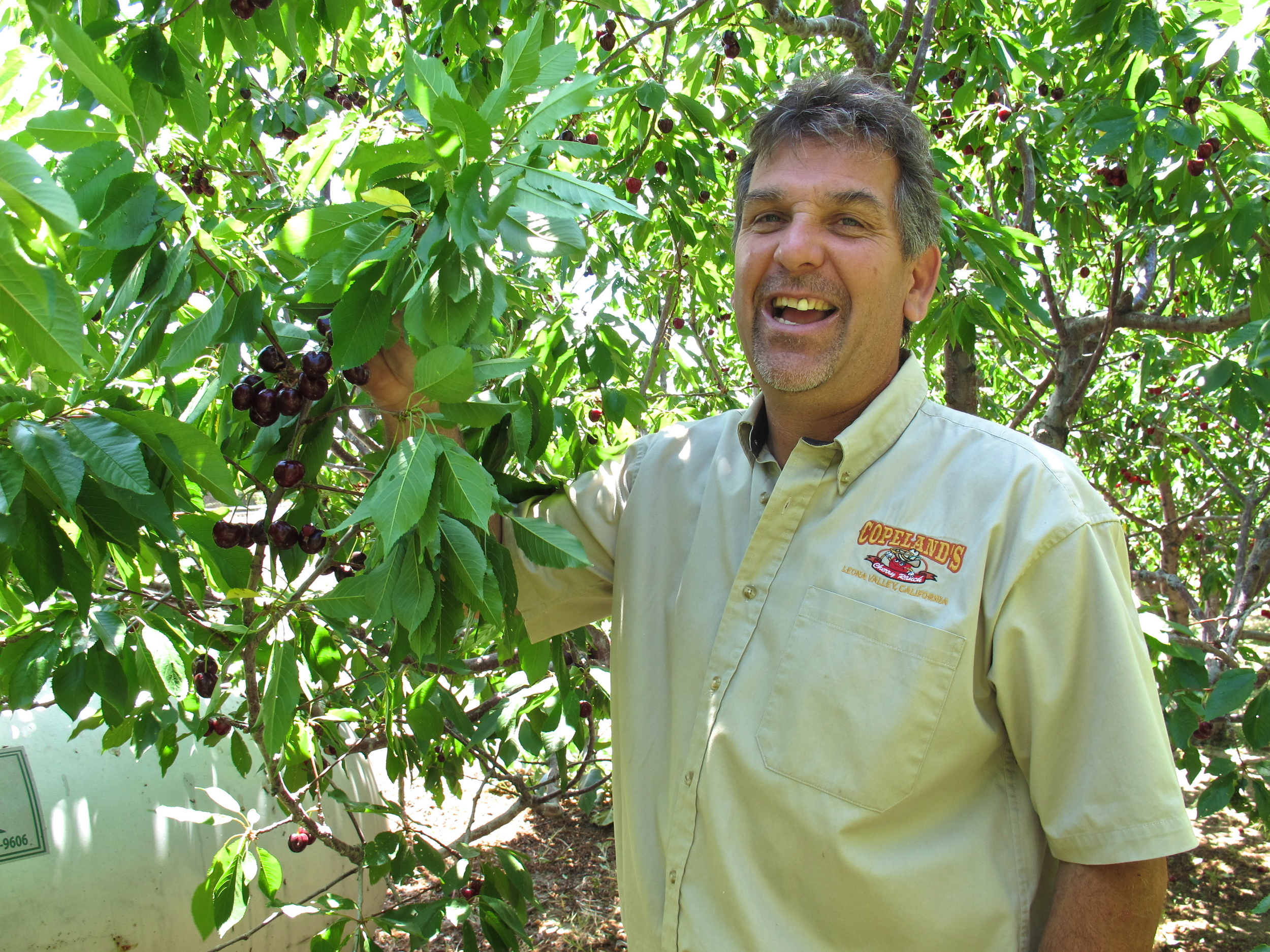 David Copeland, owner of Copeland's Organic Cherries