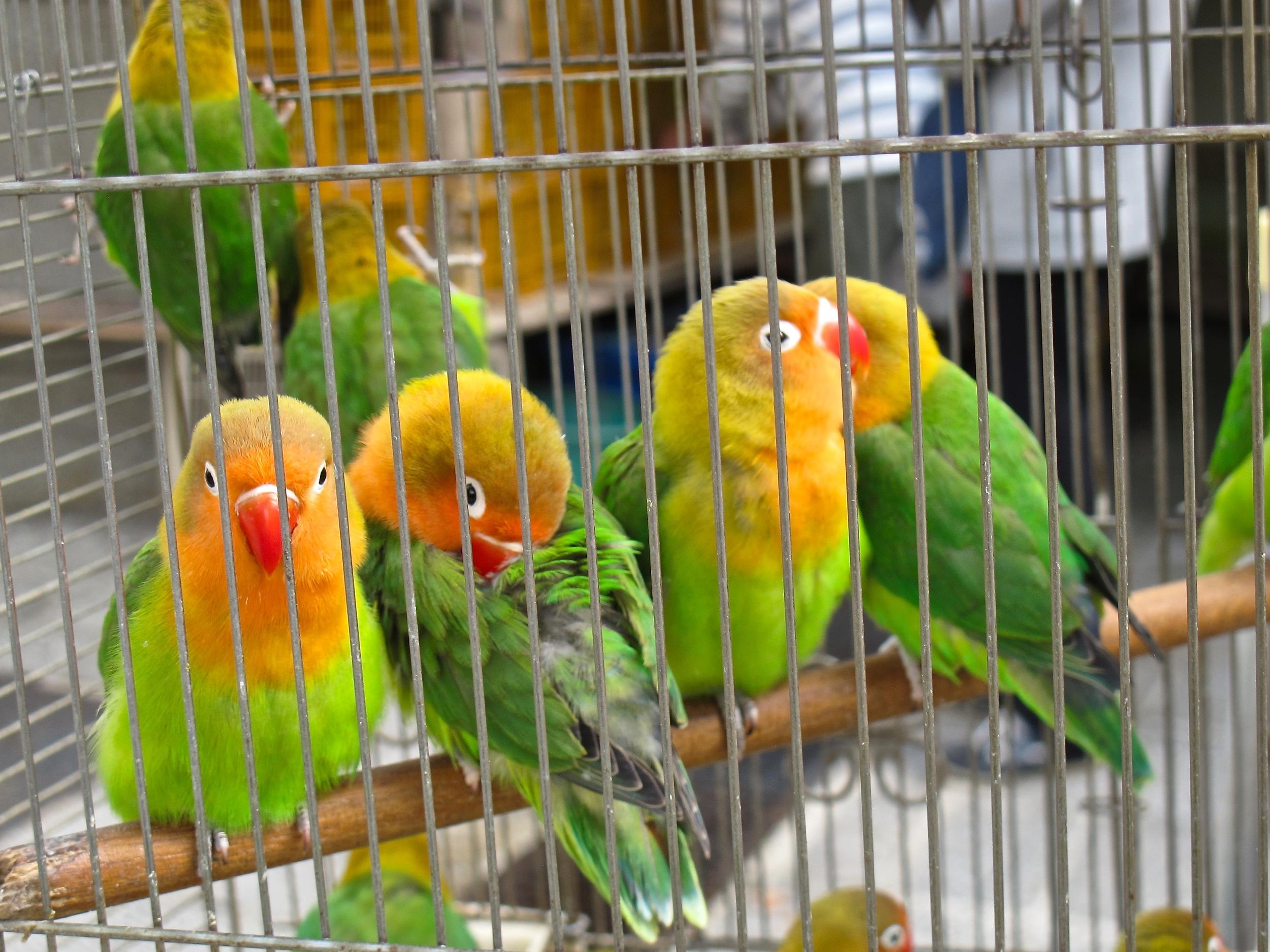 Hong Kong Bird St..JPG