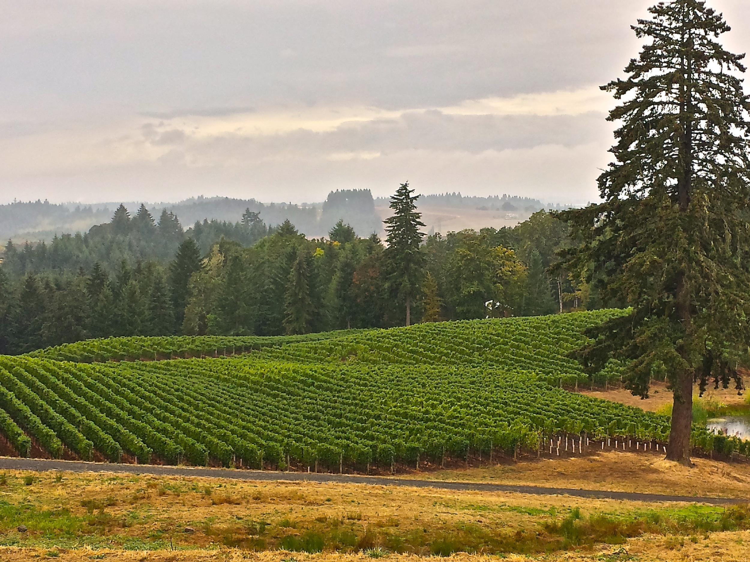 Willamette Valley Wineries
