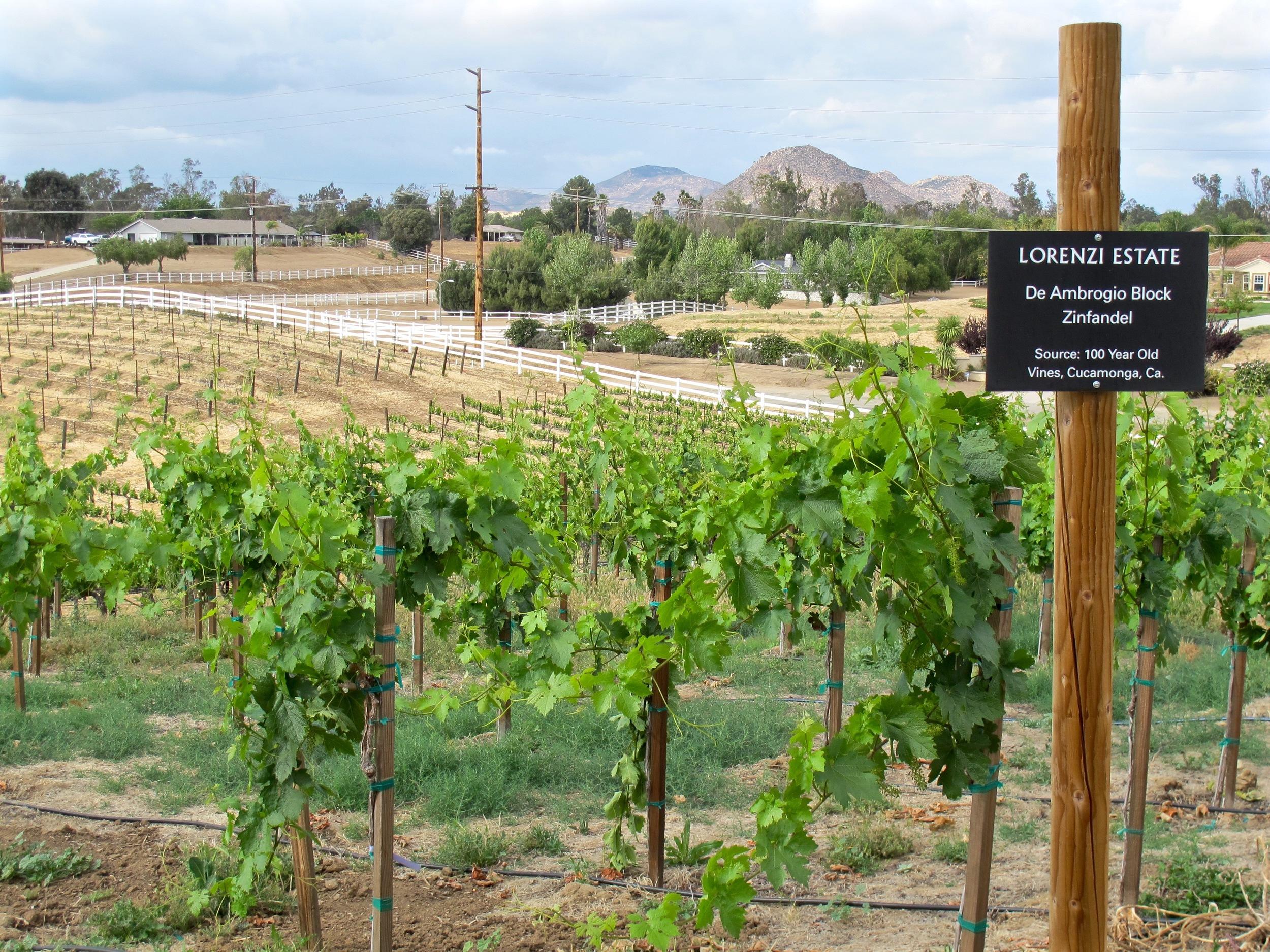 Lorenzi Vineyards Temecula